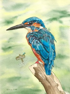 Rosalie Osborne Gibb Kingfisher resized