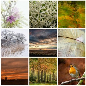 9 Photographers for Snowdrop Sundays 3